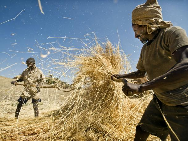 farmers with hay