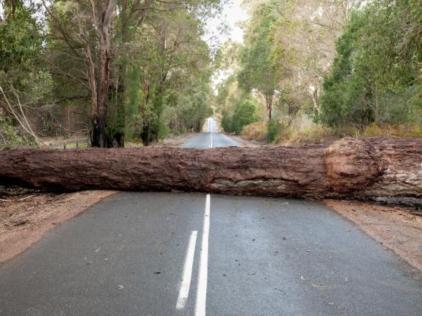 Fallen tree across road