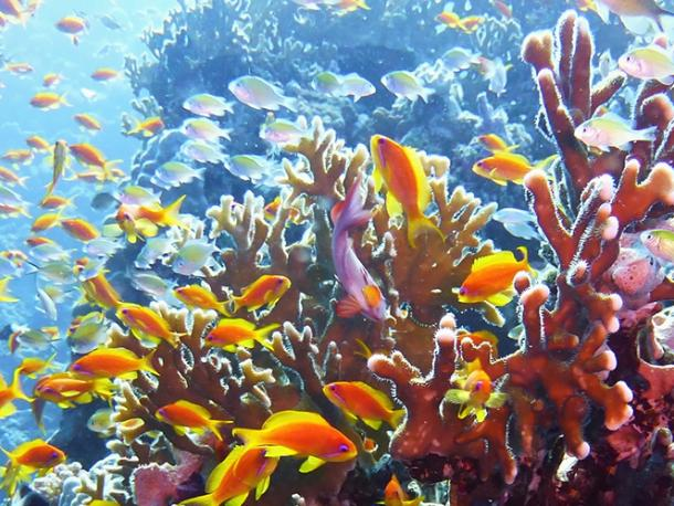 The Great Barrier Reef, which is under threat from climate change effecting sea temperatures and water acidity.