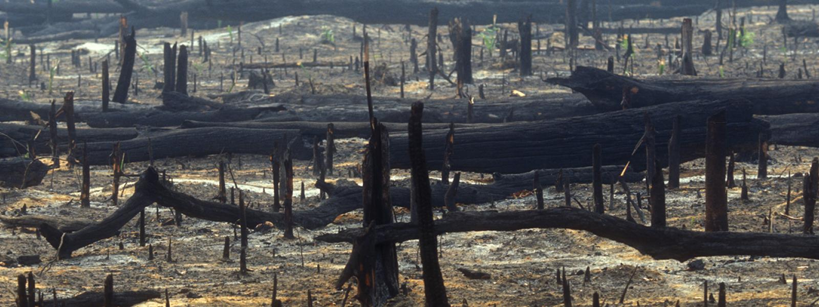 Forest fires in the Amazon