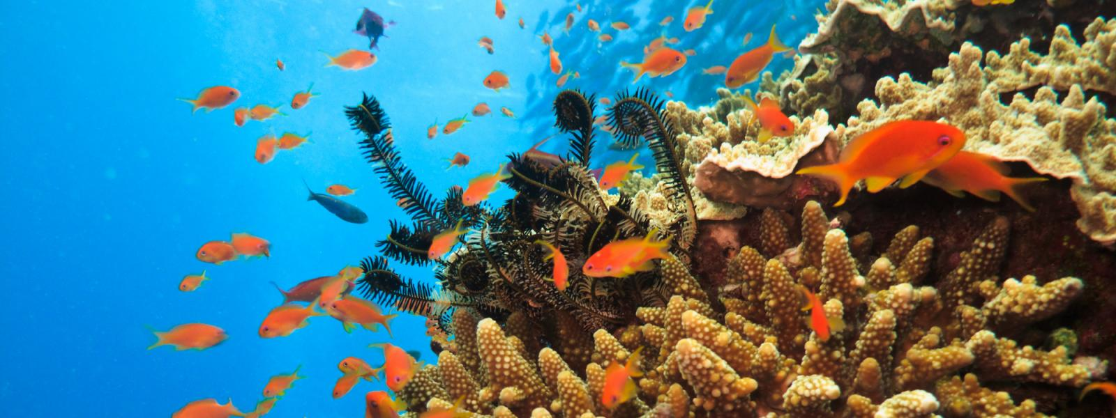 Fish on coral on Great Barrier Reef