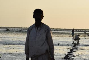 Planting mangroves in the Indus Delta, Pakistan, to capture carbon, adapt to climate change impacts, restore habitats for wildlife and provide livelihood options for local communities.