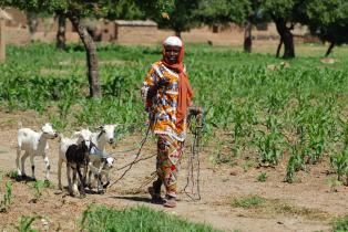 Asseta Lompo with her goats in Burkina Faso