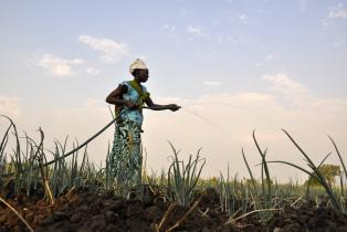 Woman watering crops in Mozambique