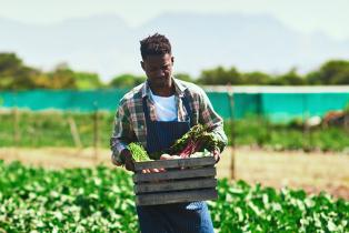 A young farmer collects his produce