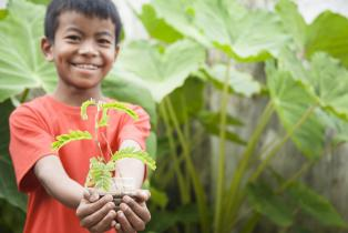 boy holding a seedling in a field