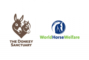 Donkey Sanctuary and World Horse Welfare